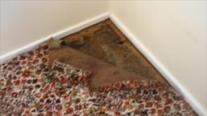 Carpet damage