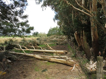 Trees Resize